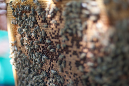 How Harvey Flooding Will Affect Bee Keeping